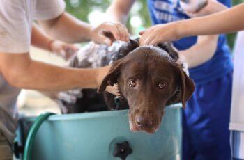 Dog Bath time