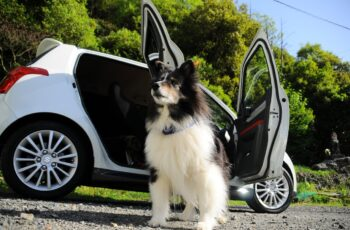 Dog in Car Dealership