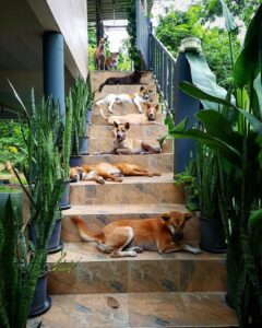 Stray Dogs 11