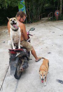 Stray dog 12
