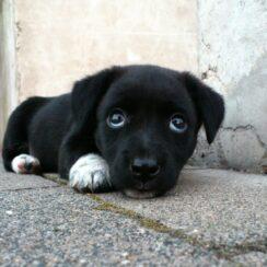 Cleft Dog