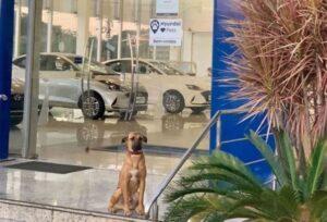 Dog Car Ownership