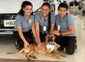 Dog Car Ownership 2