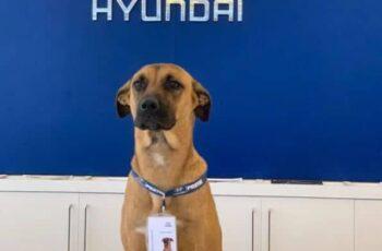Dog Car Ownership 4