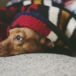 dog, puppy, sleep