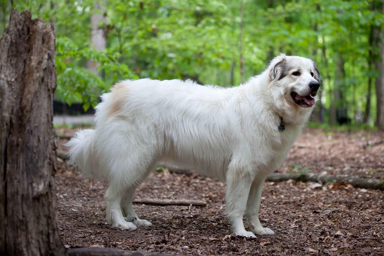 dog, pet, fur
