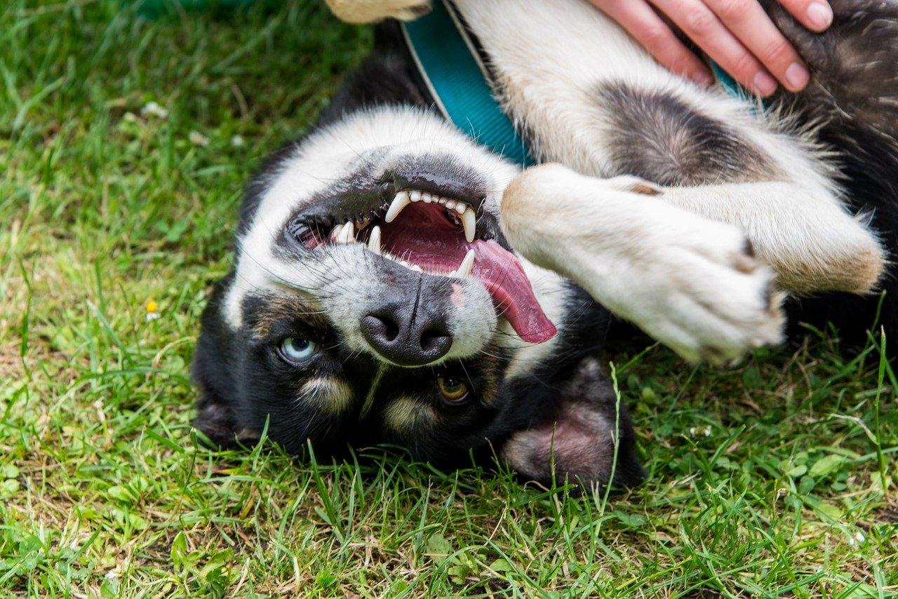 fun, funny, dog